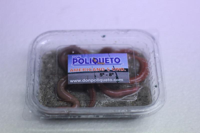 poliqueto_cebo_4