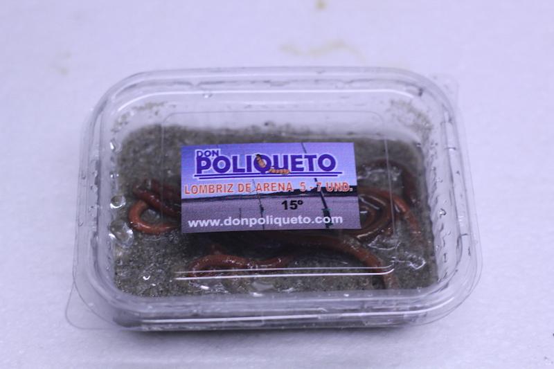 poliqueto_cebo_41